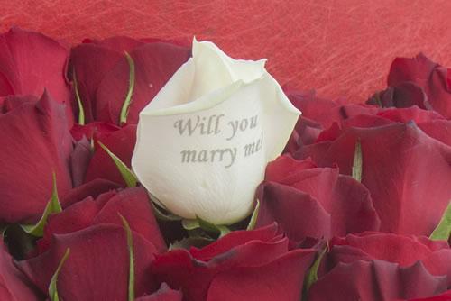 プロポーズ バラにメッセージ